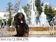 Купить «Мокрая такса на фоне фонтана летом», фото № 2064276, снято 18 июля 2010 г. (c) Оксана Лычева / Фотобанк Лори