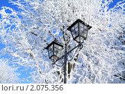 Купить «Деревья и фонарь в снегу», фото № 2075356, снято 10 января 2010 г. (c) Сергей Яковлев / Фотобанк Лори