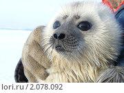Белёк. Стоковое фото, фотограф Михаил Никонов / Фотобанк Лори