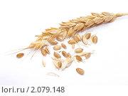 Пшеничный колос на белом фоне. Стоковое фото, фотограф Дмитрий Сечин / Фотобанк Лори