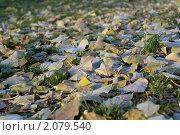 Осенние листья. Стоковое фото, фотограф Сергей Землянов / Фотобанк Лори