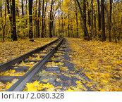 Железная дорога, проходящая через лес. Стоковое фото, фотограф Косторная Наталья / Фотобанк Лори