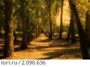 Купить «Аллея», фото № 2090636, снято 20 августа 2010 г. (c) Валышков Вячеслав / Фотобанк Лори