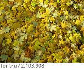 Фон из желтых листьев. Стоковое фото, фотограф Светлана Петрова / Фотобанк Лори