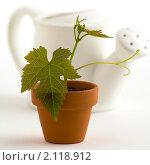 Купить «Молодое растение в горшке и лейка», фото № 2118912, снято 14 мая 2007 г. (c) Наталия Кленова / Фотобанк Лори