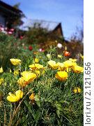 Желтые цветы в саду. Стоковое фото, фотограф Анна Кузина / Фотобанк Лори