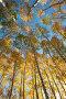 В осеннем лесу, фото № 2121956, снято 17 октября 2010 г. (c) Yanchenko / Фотобанк Лори