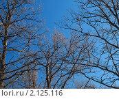 Ветки без листьев на фоне голубого неба. Стоковое фото, фотограф Назвин Алексей / Фотобанк Лори