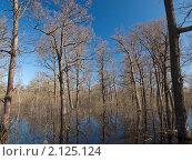 Голые дубы в воде. Стоковое фото, фотограф Назвин Алексей / Фотобанк Лори