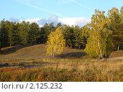 Купить «Осенний пейзаж с березами и соснами», фото № 2125232, снято 17 сентября 2010 г. (c) Виталий Горелов / Фотобанк Лори