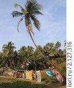 Купить «Индийские покрывала на пальме. Пляж Вагатор. Гоа. Индия», фото № 2127316, снято 7 февраля 2010 г. (c) Александр Солдатенко / Фотобанк Лори