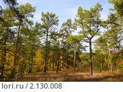 Купить «Осенний пейзаж с лиственницей», фото № 2130008, снято 18 сентября 2010 г. (c) Виталий Горелов / Фотобанк Лори