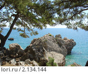 Кедровые ветви на побережье Средиземного моря. Стоковое фото, фотограф Владимир Лобановский / Фотобанк Лори