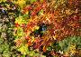 Золотая осень, фото № 2135888, снято 14 октября 2010 г. (c) Галина  Горбунова / Фотобанк Лори