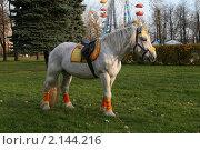 Лошадь в солнечных лучах на траве. Стоковое фото, фотограф Мария Васильева / Фотобанк Лори