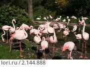 Фламинго. Стоковое фото, фотограф Наталия Банникова / Фотобанк Лори
