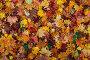 Осенние листья, фото № 2147004, снято 28 июня 2017 г. (c) OSHI / Фотобанк Лори