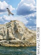Купить «Чайка над морем», фото № 2149508, снято 25 марта 2019 г. (c) Сергей Павлов / Фотобанк Лори