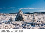 Купить «Заснеженные елки. Зимний пейзаж.», фото № 2160488, снято 19 ноября 2010 г. (c) Виталий Романович / Фотобанк Лори