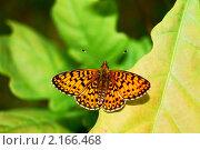 Бабочка. Стоковое фото, фотограф Олеся Малиновская / Фотобанк Лори