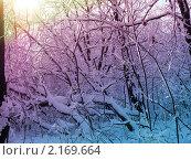 Зимние деревья, раскрашенные светом. Стоковое фото, фотограф Полухин Сергей / Фотобанк Лори