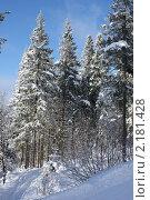 Зимний пейзаж. Стоковое фото, фотограф Марина Когута / Фотобанк Лори