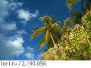 Тропический пейзаж. Стоковое фото, фотограф Сергеева Дарья / Фотобанк Лори