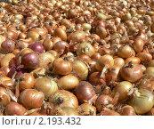 Луковый урожай. Стоковое фото, фотограф Полухин Сергей / Фотобанк Лори
