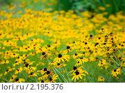 Жёлтые цветы. Стоковое фото, фотограф Екатерина Давыдова / Фотобанк Лори