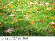 Осенние листья на зеленой траве. Стоковое фото, фотограф Решетило Александр / Фотобанк Лори