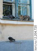 Соседство. Стоковое фото, фотограф Александра Забалдина / Фотобанк Лори