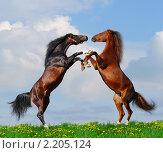 Купить «Две лошади дерутся в поле», фото № 2205124, снято 29 сентября 2007 г. (c) Абрамова Ксения / Фотобанк Лори
