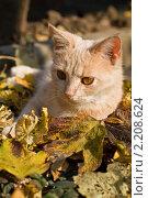 Рыжий кот лежит в осенней листве. Стоковое фото, фотограф LenaLeonovich / Фотобанк Лори
