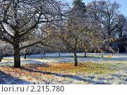 Купить «Морозное  утро в парке», фото № 2215780, снято 28 ноября 2010 г. (c) Татьяна Кахилл / Фотобанк Лори