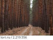 Купить «Прямая просека сквозь сосновый лес», фото № 2219556, снято 24 сентября 2010 г. (c) Михаил Иванов / Фотобанк Лори