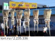 Купить «Сушка кальмаров на солнце», фото № 2235336, снято 17 октября 2010 г. (c) Gagara / Фотобанк Лори