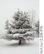 Купить «Зимняя елка», фото № 2236816, снято 16 сентября 2007 г. (c) Алексей Ухов / Фотобанк Лори