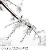 Купить «Лед на ветках деревьев», фото № 2245412, снято 26 декабря 2010 г. (c) Екатерина Овсянникова / Фотобанк Лори