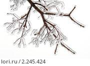 Купить «Лед на ветках деревьев», фото № 2245424, снято 26 декабря 2010 г. (c) Екатерина Овсянникова / Фотобанк Лори