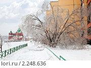 Купить «После ледяного дождя. Городской пейзаж», фото № 2248636, снято 26 декабря 2010 г. (c) Parmenov Pavel / Фотобанк Лори