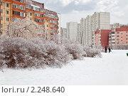 Купить «Обледенелые кусты после зимнего дождя рядом с жилыми домами», фото № 2248640, снято 26 декабря 2010 г. (c) Parmenov Pavel / Фотобанк Лори
