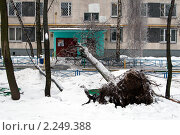 Купить «Упавшее дерево на подъездное крыльцо. Снег с дождем.», фото № 2249388, снято 26 декабря 2010 г. (c) Сергей Лешков / Фотобанк Лори