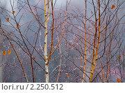 Купить «Капли на ветках», фото № 2250512, снято 24 ноября 2010 г. (c) Александр Артемьев / Фотобанк Лори