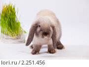 Купить «Кролик и куст», фото № 2251456, снято 21 ноября 2018 г. (c) Илья Малышев / Фотобанк Лори