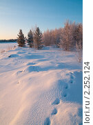 Купить «Зимний пейзаж. Следы на снегу», фото № 2252124, снято 22 декабря 2010 г. (c) Икан Леонид / Фотобанк Лори