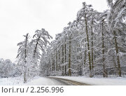 Купить «Зима в Битцевском лесопарке», фото № 2256996, снято 1 января 2011 г. (c) Алёшина Оксана / Фотобанк Лори