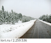 Зимний лес у дороги. Стоковое фото, фотограф Дина Мальцева / Фотобанк Лори