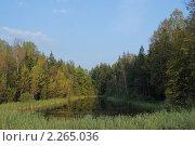 Лесное озеро (2008 год). Редакционное фото, фотограф Денис Трубецкой / Фотобанк Лори