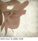 Купить «Текстура старой бумаги с гиппеаструмом (Амариллис)», фото № 2266124, снято 27 мая 2019 г. (c) Tamara Kulikova / Фотобанк Лори