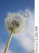 Купить «Одуванчик на ветру», фото № 2266608, снято 29 мая 2010 г. (c) Екатерина Рыбина / Фотобанк Лори
